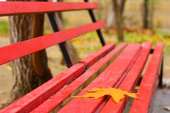 Autumn in city, yellow leaf on bench Stock Images