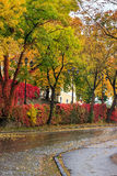 Autumn cityscape after rain, with yellowed trees and street lamp Royalty Free Stock Images