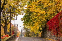 Autumn cityscape after rain, with yellowed trees and street lamp Stock Images