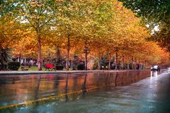 Autumn cityscape in Tirana, Albania capital. Cityscape after rain, autumn view to a street sidewalk with trees with yellow leaves, colourful reflections in rainy Royalty Free Stock Photos