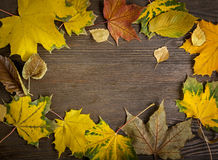 Autumn classified on the tree with leaf frame for words and insc Stock Image
