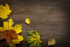 Autumn classified on the tree with leaf frame for words and insc Stock Images