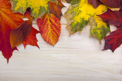 Autumn classified on the tree with leaf frame for words and insc Royalty Free Stock Images