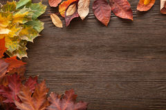 Autumn classified on the tree with leaf frame for words and insc Royalty Free Stock Photos
