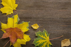 Autumn classified on the tree with leaf frame for words and insc Royalty Free Stock Image