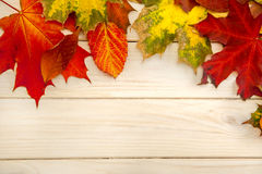 Autumn classified on the tree with leaf frame for words and insc Royalty Free Stock Photography