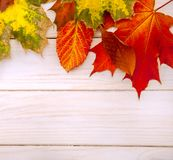 Autumn classified on the tree with leaf frame for words and insc. Riptions, copy space, top view royalty free stock images