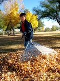 Autumn Clean Up. Young boy raking a large area or fall leaves Royalty Free Stock Photography