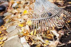 Autumn cleaning. rolling rakes collect fallen leaves Stock Photography