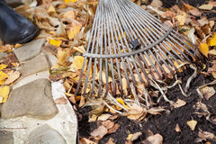 Autumn cleaning. rolling rakes collect fallen leaves Stock Images