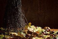 Autumn clearing in basement Royalty Free Stock Image