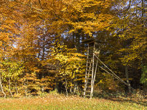 Autumn at a clearing of a forest Stock Photography