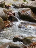 Autumn close up. Autumn river close up in the forest Stock Photography