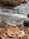 Autumn close up. Autumn river close up in the forest Royalty Free Stock Photos