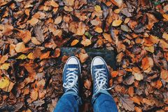 Autumn, Close-up, Color stock images