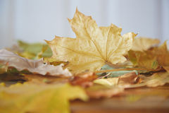 Autumn Stock Photo