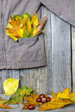 Autumn clothing with leaves on wooden boards Stock Image