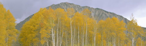 Autumn clouds at Kebler Pass. Gunnison National Forest, Colorado Royalty Free Stock Photo