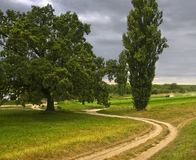 Autumn cloudy landscape with big oak Royalty Free Stock Image