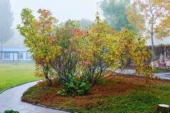 The autumn clove tree Stock Photo