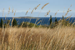 Autumn coast - 11. Withered grass on the background of the island and the sea in Bulgaria Stock Photography