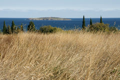 Autumn coast - 9. Withered grass on the background of the island and the sea in Bulgaria Stock Photography