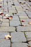 Autumn Cobblestone Walkway Stock Photos