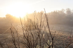 Autumn cobwebs on bushes Royalty Free Stock Photography