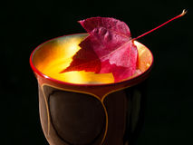 Autumn cocktail Stock Image