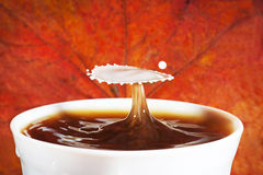 Autumn coffee with splash of milk Stock Images