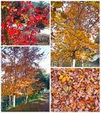 Autumn collage stock photos