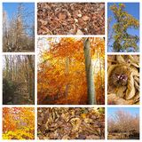 Autumn collage royalty free stock photography