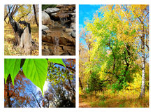 Autumn collage. A collage about autumn in nature Stock Photo