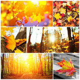 Autumn collage Stock Images