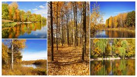 Autumn collage consisting of 5 plots Stock Photos