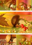 Autumn collage with mushrooms Royalty Free Stock Images