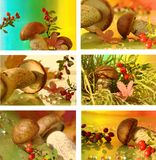 Autumn collage with mushrooms Stock Photo