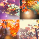 Autumn collage. Autumn orange collage Stock Photo