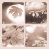 Autumn collage Royalty Free Stock Photos