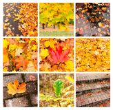 Autumn collage showing different autumn landscapes Royalty Free Stock Photo