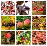 Autumn collage showing different autumn pictures of fruits, berries and mushrooms Stock Photo