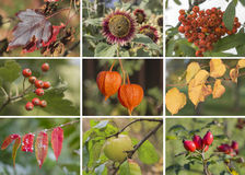 Autumn collage. Showing different autumn pictures royalty free stock images