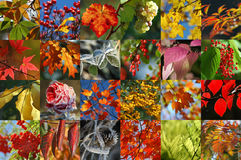 Autumn collection Stock Image