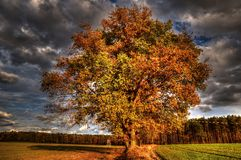 The autumn collection of colors HDR Stock Photo