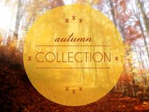 Autumn collection conceptual creative illustration Royalty Free Stock Photography
