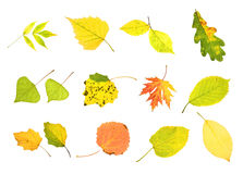 Autumn collection leaves stock photos