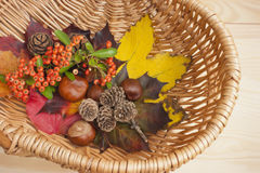 Autumn collection, leaves, conkers. Autumn collection of vibrant colourful leaves, conkers, pine cones, red berries in a wicker basket. Vibrant colors, brown royalty free stock photos