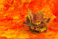 Autumn collection. A pale of autumn leaves on colored background Stock Photos