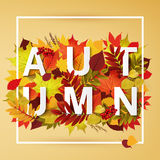 Autumn collection. Autumn Typographical Background With autumn  color leaves Royalty Free Stock Images