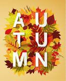 Autumn collection. Autumn typographical background with autumn leaves. Autumn typographic. Fall leaf Stock Image